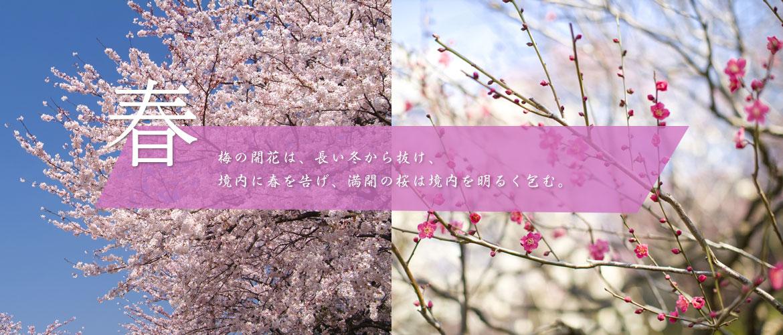 春~梅の開花は、長い冬から抜け、境内に春を告げ、満開の桜は境内を明るく包む。
