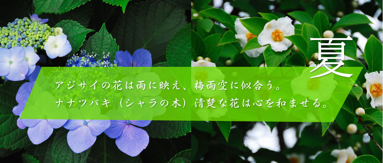 夏~アジサイの花は雨に映え、梅雨空に似合う。ナナツバキ(シャラの木)清楚な花は心を和ませる。
