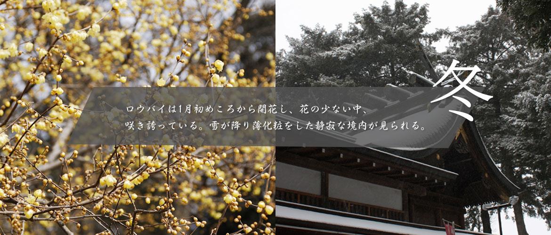 冬~ロウバイは1月初めころから開花し、花の少ない中、咲き誇っている。雪が降り薄化粧をした静寂な境内が見られる。